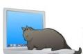 Спит на вашем ноутбуке и другой технике